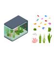 isometric goldfish in freshwater aquarium and vector image vector image