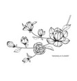 magnolia flower and leaf hand drawn botanical vector image vector image