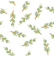 rosemary seamless pattern vector image