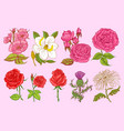 set of wedding botanical flowers in the garden or vector image vector image