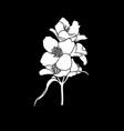 black and white branch flower jasmine outline vector image vector image