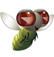 comical fly vector image vector image