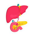 educational medical poster with pancreas and liver vector image