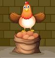 a hen above eggs vector image vector image