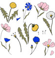 field flower in cartoon style vector image