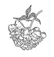 hand-drawing peony flower vector image vector image