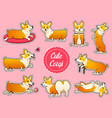 set of cute dogs breed welsh corgi pembroke on vector image
