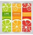 Three bright banner with stylized citrus fruit and vector image vector image