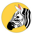 beautiful zebra on white background vector image vector image