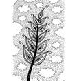 wheat - flower black and white ink vector image vector image