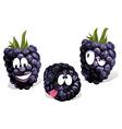 blackberry cartoon vector image