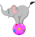 cartoon circus elephant standing on a ball vector image