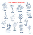 herbal therapy for whooping couch vector image