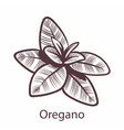 oregano engraving isolated vegan vector image