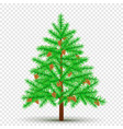 spruce with cones transparent background vector image vector image