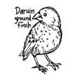 darwin ground finch vector image vector image