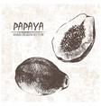 digital detailed papaya hand drawn vector image vector image