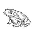 hallucinogenic toad engraving vector image vector image