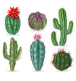 realistic cactus decorative desert cactuses vector image vector image