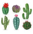realistic cactus decorative desert cactuses vector image