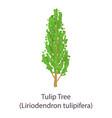 tulip tree icon flat style vector image vector image