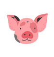 face of cute baby mini pig funny happy piglets vector image vector image