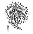 black and white aster flower vector image vector image