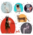 set with pets vector image
