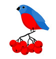 bullfinch on the bunch of rowan vector image vector image