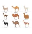 camel llama guanaco alpaca breeds icon set animal vector image