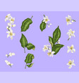 citrus branches set with flowers and leaves vector image