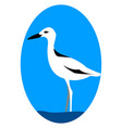 crab plover on white background vector image