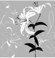 LILIa vector image