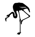 silhouette of a flamingo vector image