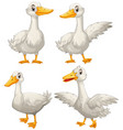 duck in four different actions vector image vector image