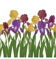Flowers iris seamless vector image