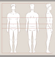 men body measurements vector image vector image