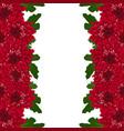 red mum chrysanthemum flower border vector image vector image
