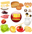 two vitamin b in plant vector image vector image