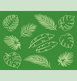 vintage tropical set palm leaves branches vector image