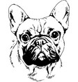 pedigree dog drawn in ink by hand vector image