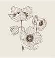 anemone flower drawing bouquet isolated vector image vector image