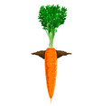 carrot grow in ground vector image vector image