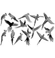 parrot silhouettes of jungle vector image vector image