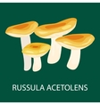Russula Acetolens isolated Wild Foraged Mushroom vector image vector image