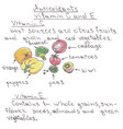 vegetables and fruits hand drawn vector image