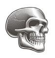 a skull profile vector image vector image