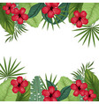 card hibiscus with palm leaves border vector image vector image