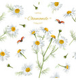 Chamomile seamless pattern vector image vector image