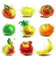 set drawing fruit vector image vector image